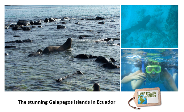 galapagos-encounter-endemic-species.png