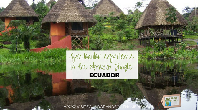 spectacular-experience-in-the-amazon-jungle-ecuador